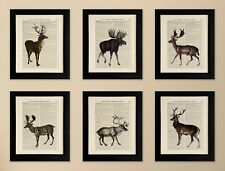 SET OF 6 ART PRINTS ON OLD ANTIQUE BOOK PAGE, Deer, Stag, Moose, Quirky Wall Art