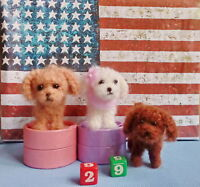 Needle Felted Animal little 3 dog (k) Wool Art Sculpture ooak miniature-gift