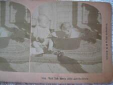"1892 ""TALL OAKS FROM LITTLE ACORNS GROW"" STEREOVIEW"