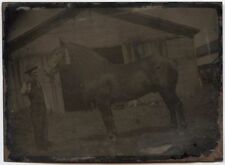 OUTDOOR TINTYPE OF A HORSE IN FRONT OF BARN
