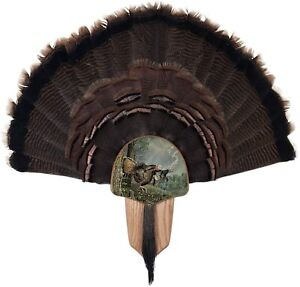 Home Decor Turkey Fan Mount And Display Kit Solid Oak With Double Strike Image