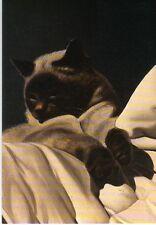 Grußkarte: Gemälde von Gérard Schlosser: schlafende Katze, Detail eines Gemäldes