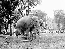 VINTAGE PHOTOGRAPHY ELEPHANTS ANIMALS CIRCUS ART POSTER PRINT LV4929