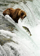 SUPERB SALMON CATCHING BEAR CANVAS #2 QUALITY FRAMED CANVAS PICTURE WALL ART A1