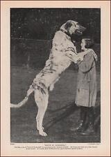 Irish Wolfhound Dog, Bruce Of Raikeshill, vintage print, authentic 1935