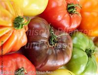 Tomaten 20 Sorten * 200 Samen *blau lila schwarz rot orange gelb weiß Tomate