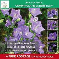 "Campanula ""Blue Bellflower"" Seeds. Compact perennial, amazing lilac bell flower!"