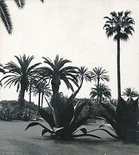 NICE c. 1935 - Jardin Villa Masséna  Agaves Palmiers  Alpes-Maritimes - Div 7555