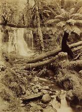 c1890 | JW BEATTIE | Silver Falls Fern Tree Gully TASMANIA | original photograph