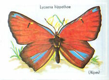 IMAGE CARD 60s PAPILLON INSECTE BUTTERFLY LYCAENA HIPPOTHOE LEPIDOPTERE Cuivré