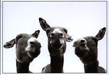 Postkarte: Drei neugierige Esel recken ihre Hälse - three curious donkeys