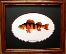 Yellow Perch/Ducks Unlimited Edition/Fishing Lures/Pan Fish/Freshwater Art Work