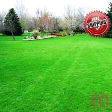 500pcs Grass Seeds Lawn Seeds zoysia Fresh Green Soft Runner Plant Golf field