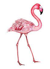 A0 canvas print painting modern bird  pink flamingo original Street florida