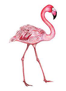 canvas print painting modern bird pink flamingo original Street florida licensed