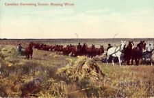 REAPING WHEAT - CANADIAN HARVESTING SCENE horses 1909