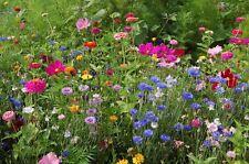 2,000 Wildflower Seed Mix Pacific Northwest Wildflower