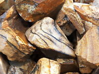 1000 Carat Lots of Picture Jasper Rough - Plus a FREE Faceted Gemstone
