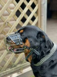 New Metal STRONG Wire Basket Dog Muzzle Rottweiler,Mastiff Golden Retriever etc