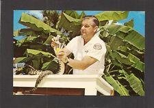 POSTCARD:  ROSS ALLEN MILKING RATTLESNAKE FOR VENOM AT SILVER SPRINGS, FLORIDA
