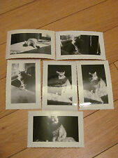 6 Cat Photo Lot Vintage Snapshot 1947 A Little Out of Focus