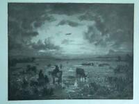 Xx Oder Vorn Antik Gravur Originell Anonym Landschaft Camargue Stier