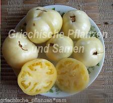 🔥 🍅Lutescente Tomate weiß weisse Tomaten Fleischtomate 10 frische Samen Balkon