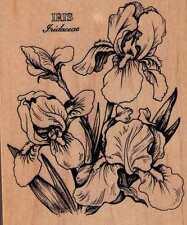 Motivo sello Rubber Stamp original PSX K 040 Botanical iris Iridaceae
