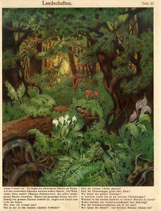 1900s TROPICAL FOREST TROPICAL FLOWERS PLANTS Antiq.Chromolithograph Print Staub