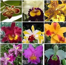 Sale - 5+ Live Orchids Plants(Cattleya, Oncidium,Dendrobium,Vanda ,Phalaenopsis)