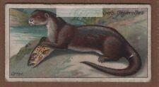River Otter Lutra vulgaris 100+ Y/O Trade Ad Card