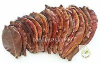 20 pcs No.1 Ketapang Catappa Indian Almond Leaf for Shrimp Betta Discus Cichlid