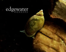 20+ Live Feeder Snails for Loaches, Puffers, Crayfish, Incredible Algae Eaters