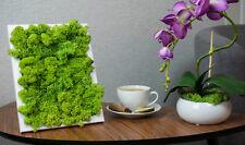 NEU Bilder Moosbild echtes Moos Pflanzenbild Deko Geschenkidee Handarbeit