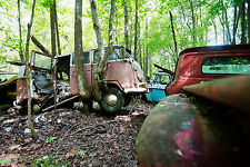 1960s V W Bus Junk Yard in the woods trees growing thru it  8 x 10 Photograph