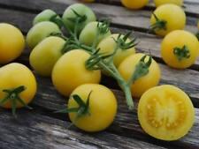 Tomato White Cherry 100 seeds ORGANIC / NON GMO