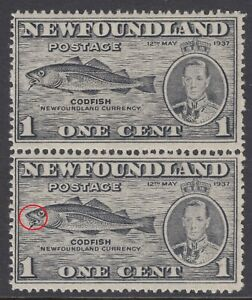 Newfoundland # 233i Fish Hook Variety Mint Never Hinged Very Fine (With Normal)