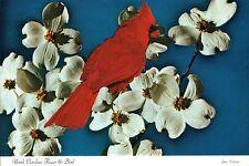 Cardinal and Dogwood Blossoms, North Carolina Bird & Flower NC - Animal Postcard