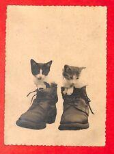 """HUMOUR PHOTO """" CHATS CATS DANS PAIRE DE BOTTES BOOTS """""""