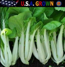 1000 Bok Choy Pak Choi Seeds White Stem Chinese Cabbage Heirloom
