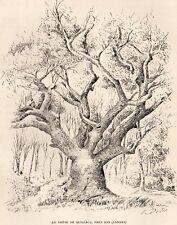 40 LE CHENE DE QUILLAC GRAVURE 1887 ENGRAVING