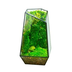 Indoor Plant Geometric Glass Vessel Container for Succulent Moss Plant Terrarium