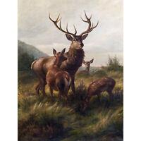 Deiker Stag Deer Antlers Doe Animal Nature Painting Large Canvas Art Print