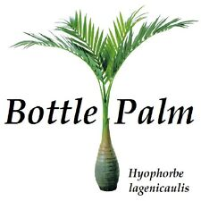 Bottle Palm Hyophorbe lagenicaulis 100 Fine SEEDS u'll get BEST Seed from HAWAII