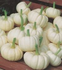 Baby Boo Pumpkin Seeds Miniature Pumpkin, Ghostly White Skin KidsLove Them
