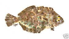 Gyotaku Fish Rubbing - Flounder