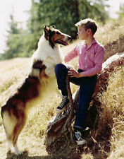JON PROVOST UNSIGNED PHOTO - 5801 - LASSIE