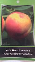 4'-5' Karla Rose Nectarine Tree Live Healthy Fruit Trees Plant New Home Garden