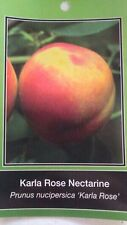 4'-5' Karla Rose Nectarine Tree Live Healthy Fruit Trees Plant New Home Garden