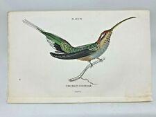 1st Ed Hand-colored Jardine's Natural History 1834 -Eurynome Hummingbird - 28
